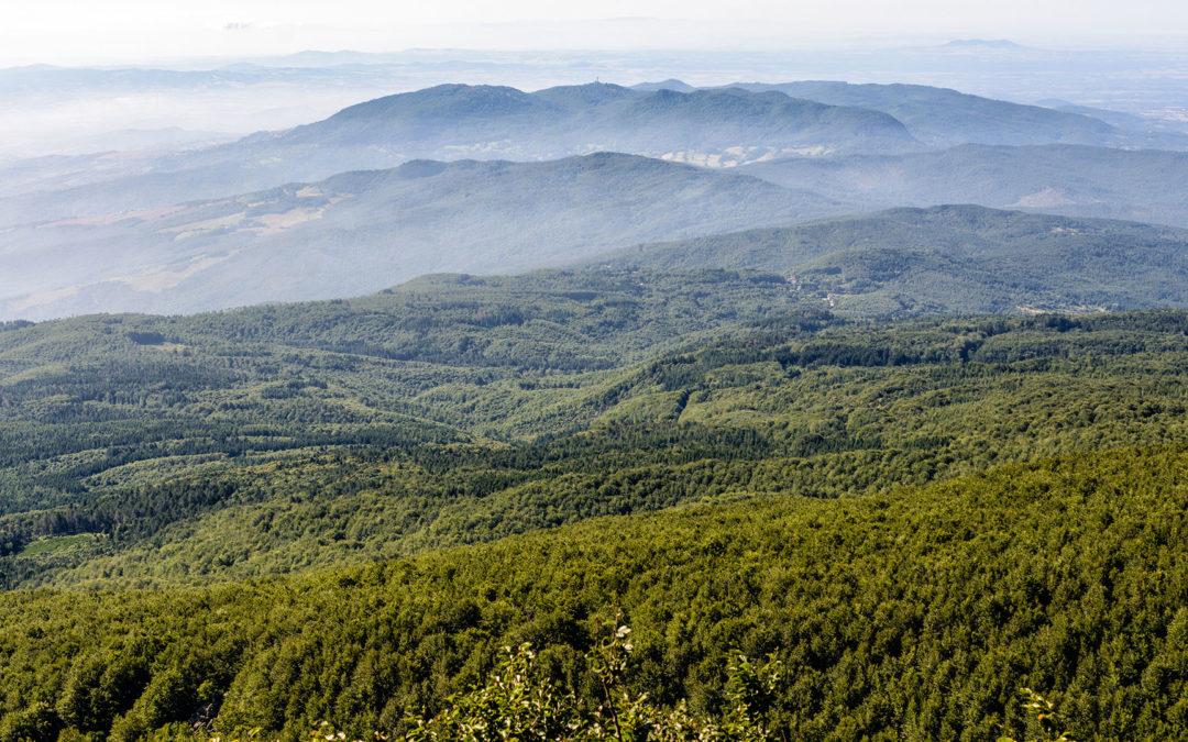 Il Tirreno Grosseto parla di Ricacci. Sull'Amiata arriva la carbonaia 2.0